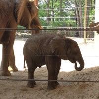 Photo taken at Toledo Zoo by Melissa C. on 5/25/2012