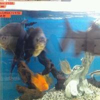 Photo taken at Aquarium City by Ivan R. on 7/23/2012