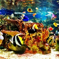 Photo taken at New England Aquarium by Asha J. on 8/14/2012