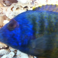 Photo taken at Malibu Sea Food by Matthew K on 6/24/2012