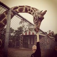 Photo taken at Natural Bridge Zoo by Woody W. on 7/21/2012