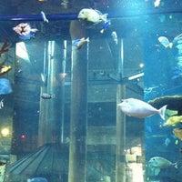 Photo taken at Islamorada Fish Company by T on 8/23/2012