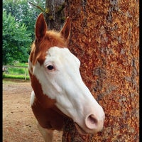 Photo taken at Sunrise Stables Equine Rescue by Brook H. on 6/23/2012
