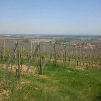 Photo taken at Pfaffenheim Vineyards by Etienne W. on 4/28/2012