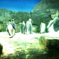 Photo taken at Osaka Aquarium Kaiyukan by mkk on 4/28/2012