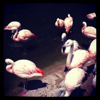 Photo taken at John Ball Zoo by Laura C. on 7/9/2012