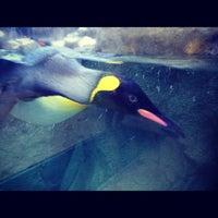 Photo taken at Calgary Zoo by Ryan P. on 7/6/2012