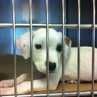 Photo taken at Atlanta Humane Society by Rebecca M. on 6/21/2012