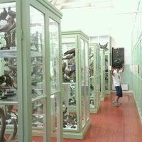 Fågelmuseet