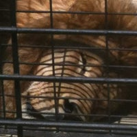 Photo taken at George H. Carroll Lion Habitat by Nancy T. on 5/23/2012
