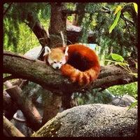 Photo taken at Sacramento Zoo by Lenka V. on 4/18/2012