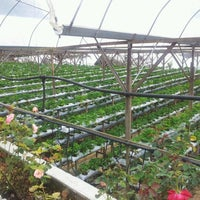 Photo taken at Genting Strawberry Leisure Farm by Melvin W. on 2/14/2012