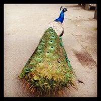 Photo taken at San Francisco Zoo by Dan W. on 2/11/2012