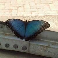 Photo taken at Lewis Ginter Botanical Garden by Marina D. on 6/16/2012