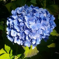 Photo taken at Christchurch Botanic Gardens by Daphne Maia L. on 3/23/2012