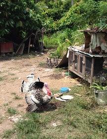 Kampung Parit 9 ban 1, 45400 Sekinchan