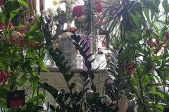 ЛаВанда / LaVanda - Цветы и свадебный декор