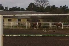 Гомельский областной ЦОР по конному спорту - спортивный центр