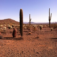 Photo taken at Sonoran Preserve - Sonoran Loop Trail by Michelle H. on 12/4/2011