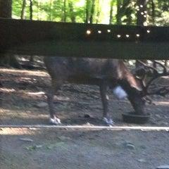 Photo taken at Binghamton Zoo at Ross Park by Ryan C. on 8/10/2011