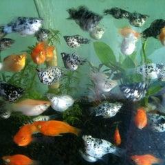 Photo taken at Pasar Ikan Hias Gunung Sari by deswanto a. on 6/19/2012