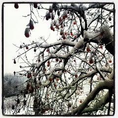 Photo taken at L'Albereta Relais & Chateaux by Grazia B. on 12/15/2012