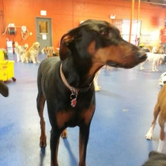 Photo taken at Urban Pooch Canine Life Center by Ryan B. on 5/1/2013