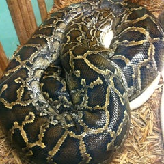 Photo taken at Reptile Gardens by Shelly on 8/11/2013