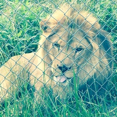 Photo taken at Carolina Tiger Rescue by Sara on 6/8/2015