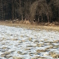 Photo taken at Mass Audubon Ipswich River Wildlife Sanctuary by Claire A. on 1/1/2014