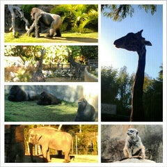 Photo taken at Los Angeles Zoo and Botanical Gardens by Cameron E. on 11/24/2012