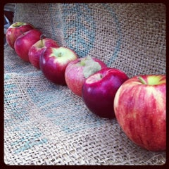 Photo taken at Cure Organic Farm by Kate Y. on 10/19/2012