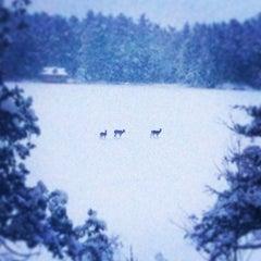 Photo taken at Stoney Lake by craig f. on 12/27/2013