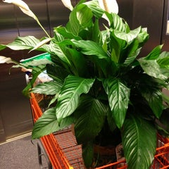 Photo taken at The Home Depot by KT C. on 4/2/2013