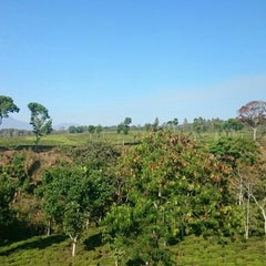 Photo taken at Kebun Teh Wonosari by Christian A. on 10/25/2015