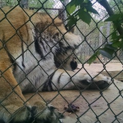 Photo taken at Exotic Feline Rescue Center by Vera Z. on 5/6/2015