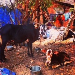 Photo taken at Goa by Anton Y. on 3/24/2013