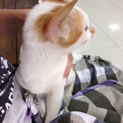 Photo taken at โรงพยาบาลสัตว์สุวรรณชาด (Suwanchard Pet Hospital) by Ontida P. on 8/7/2014