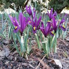 Photo taken at Wegerzyn Gardens MetroPark by Sherrie R. on 3/30/2013