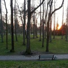 Photo taken at Žurku koks by Armands K. on 4/20/2014
