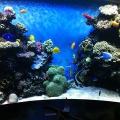 Photo taken at Monterey Bay Aquarium by Eloisa G. on 11/7/2012