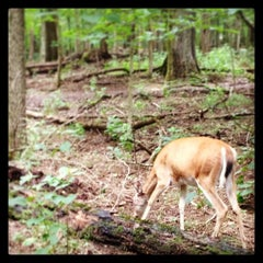 Photo taken at Radnor Lake State Park by Kevin F. on 8/18/2013