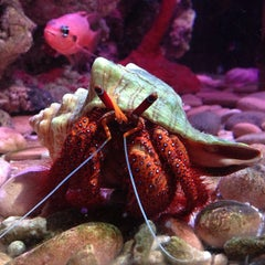 Photo taken at National Sea Life Centre by Lucka P. on 5/25/2013