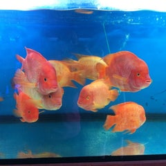 Photo taken at Qian Hu Fish Farm by Huang Z. on 9/21/2014