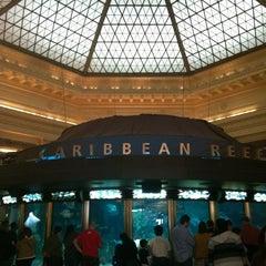 Photo taken at Shedd Aquarium by Kat J. on 11/17/2012