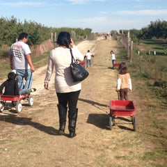 Photo taken at Curtis Orchard & Pumpkin Patch by Mileen Z. on 10/14/2013