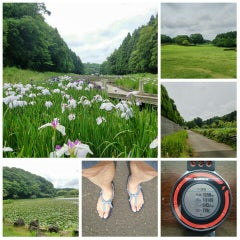 Photo taken at 千葉市昭和の森公園 by 「た」 on 6/11/2015