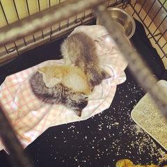 Photo taken at Shane Veterinary by Jennifer D. on 5/29/2014