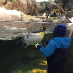 Photo taken at Penguin & Puffin Coast by Allison B. on 1/29/2016