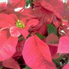 Photo taken at Lowe's Home Improvement by Bob B. on 12/7/2012